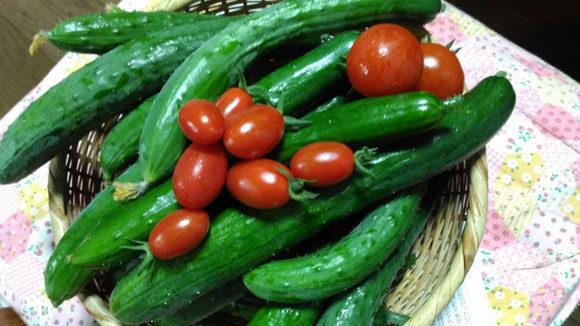 自慢の採れたて新鮮野菜